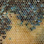 French Bees Create Blue Honey After Raiding M&M's Factory