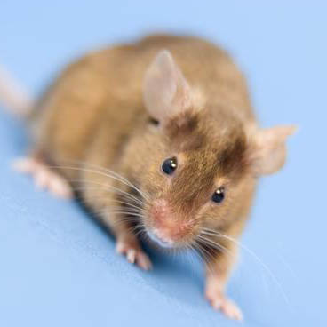 Trojan-Horse Therapy 'Completely Eliminates' Cancer In Mice